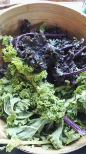 Økologisk grønnkål og rød grønnkål til fermentering