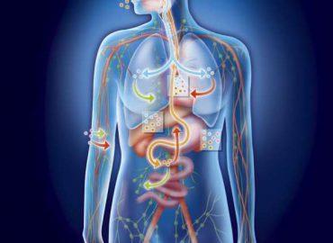 bioresonans frekvenser